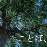 風のなる樹