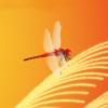 「赤とんぼ / 心響カバー」公開